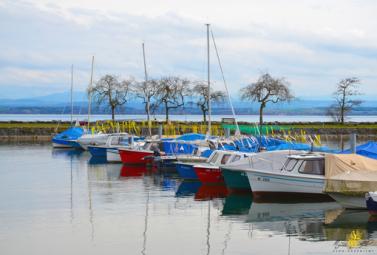Port, Auvernier
